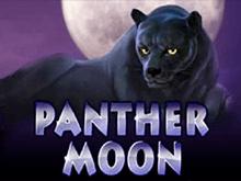 Panther Moon в клубе Вулкан