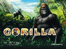 Игровой онлайн-автомат Gorilla в клубе Вулан