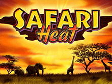 Играть в автомат Safari Heat в клубе Вулкан