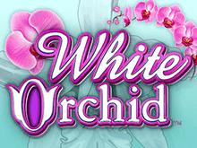 Виртуальный автомат Белая Орхидея на деньги
